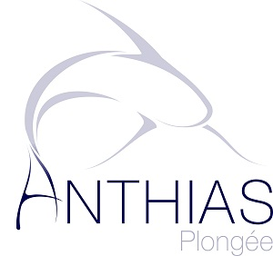 ANTHIAS PLONGEE
