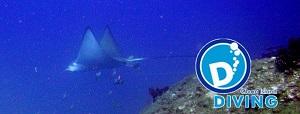 Cham Island Diving, paretenaire de Euro Viêtnam Diving à ...