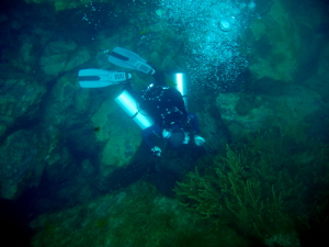 Dilong, dive in China.
