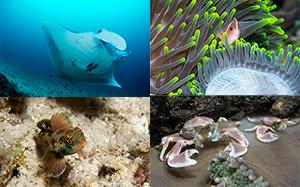 Actualités - Salon de la plongée sous-marine