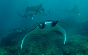 Infos - Salon de la plongée sous-marine