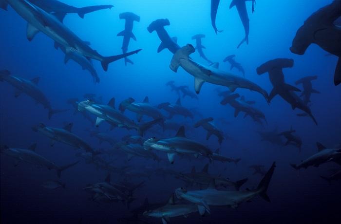 L Ile de Malpelo, Le sanctuaire des requins vous attend