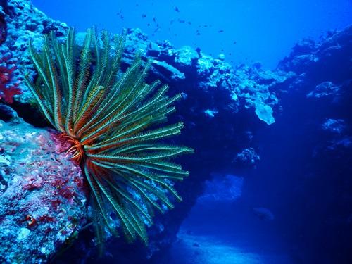 Voyage plongée en Nouvelle Calédonie