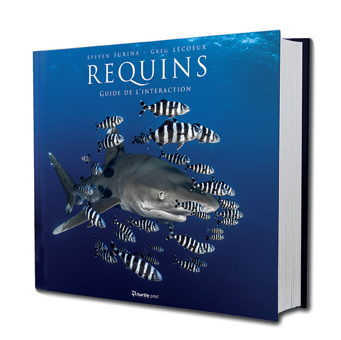 Requins guide du comportement