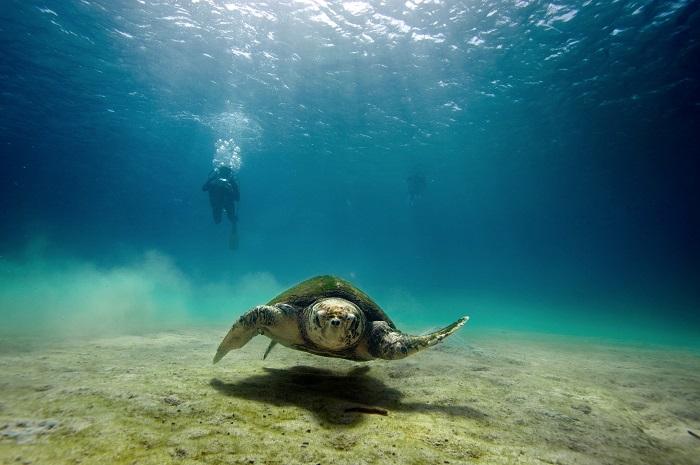UNE FONDATION SUISSE POUR EXPLORER LES OCEANS