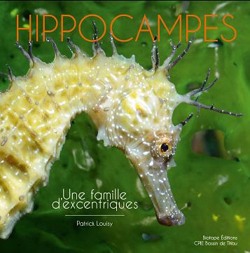 Hippocampes, une famille d'excentrique
