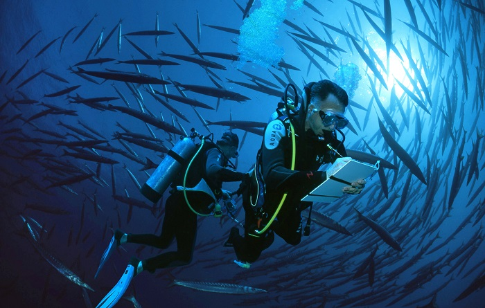 Enregistrez vos photos de poissons marins !
