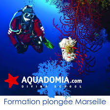 Changer de vie : devenir guide, moniteur, plongeur pro en stage intensif Marseille