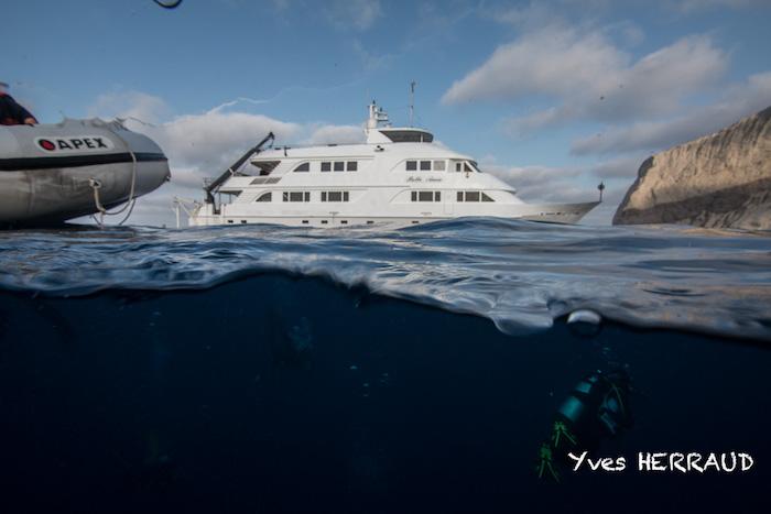 Nautilus Belle Amie ; Découvrez Socorro ou Guadalupe Island ...