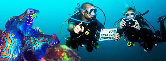 Objectif Atlantide, l'Enquête sous-marine !