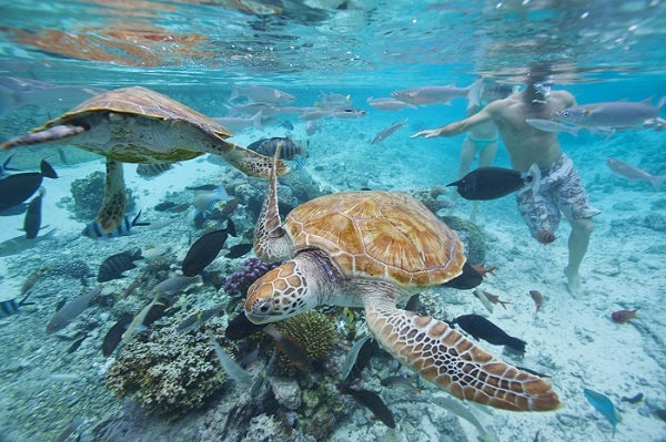 Tahiti Et Ses Îles : une immersion dans le paradis bleu