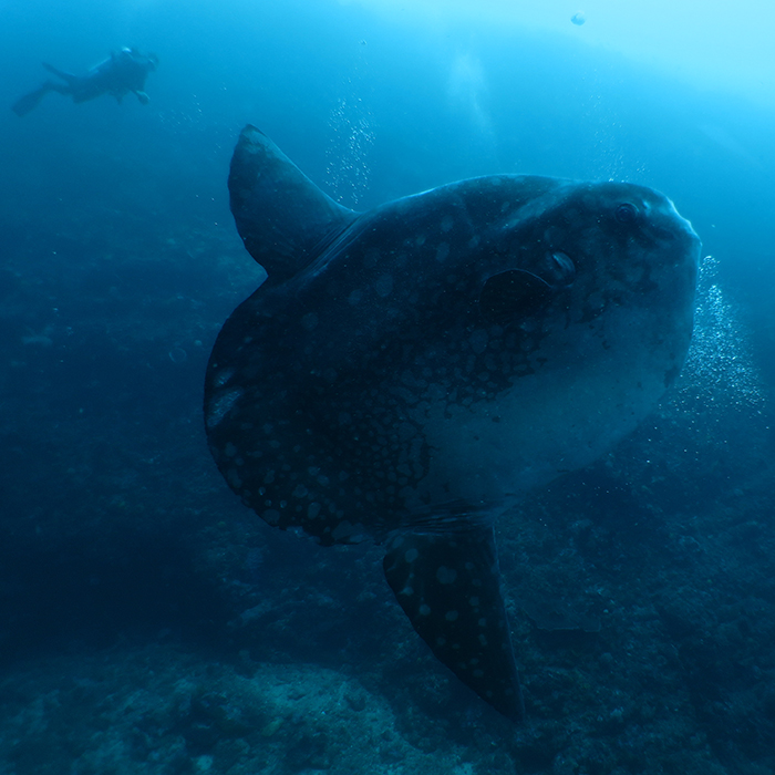 La Mole Géante
