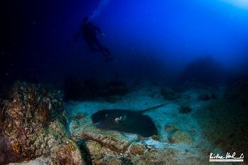 Plonger avec nous aux Caraibes ou au Pacifique pas de problèmes!