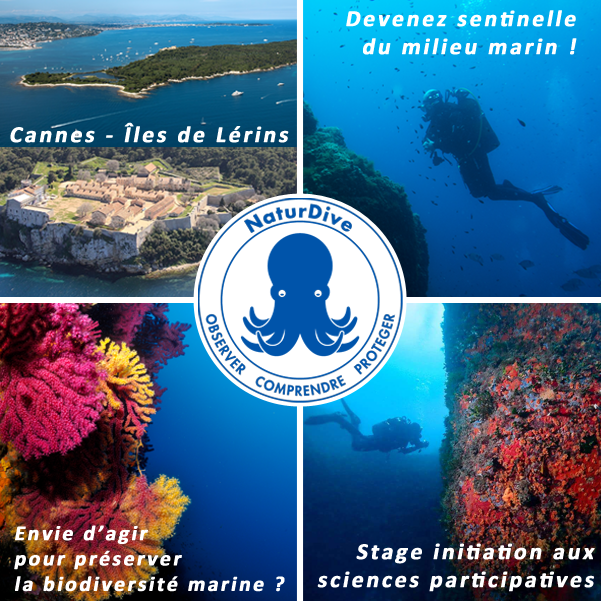 Stage Sciences Participatives aux Iles de Lérins à Cannes