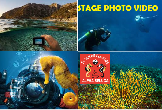 Stage PHOTO VIDEO avec ALPHA BELUGA Fréjus