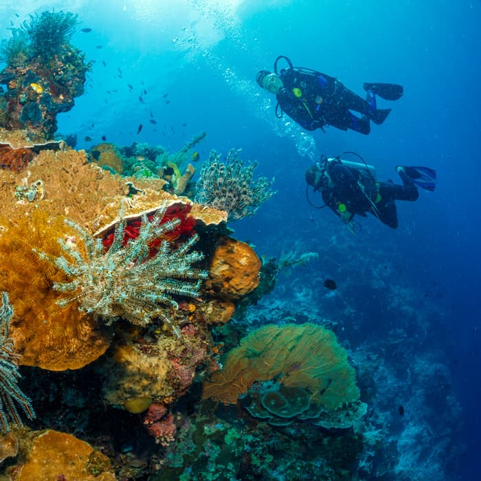 Choose a PADI IDC in Indonesia for 2020