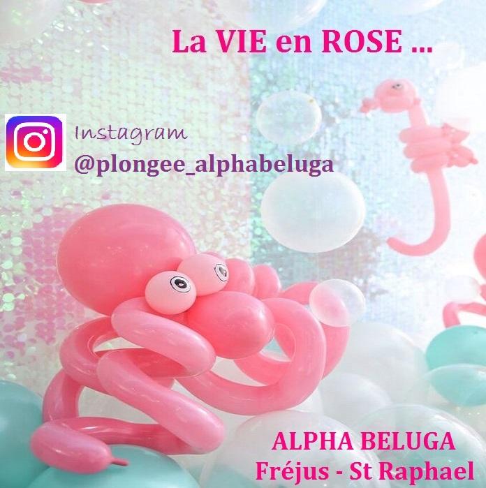 PLONGEZ AUTREMENT PLONGEE ALPHABELUGA