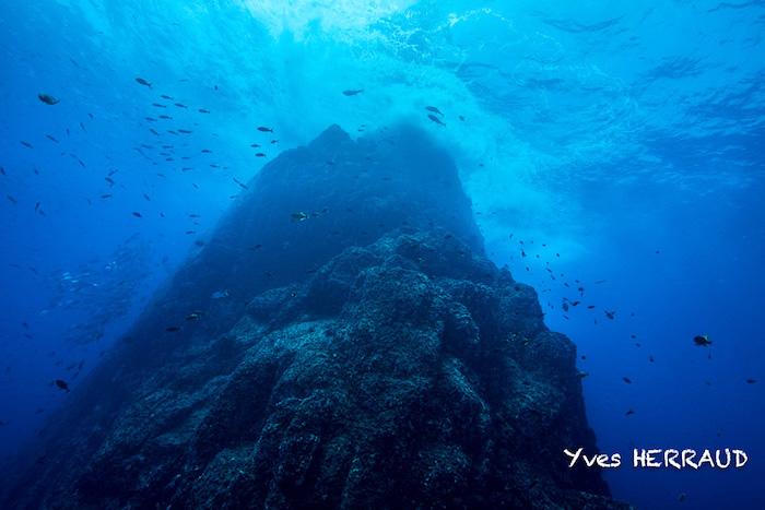 Socorro Island et la mer de Cortez