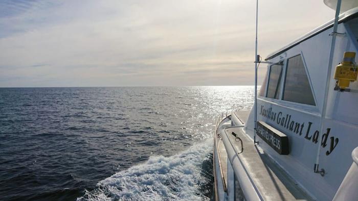 Nautilus Gallant Lady