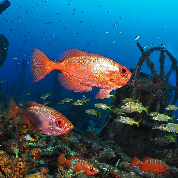 AWATEHA - Gagnez 2 x 10 plongées en Martinique !