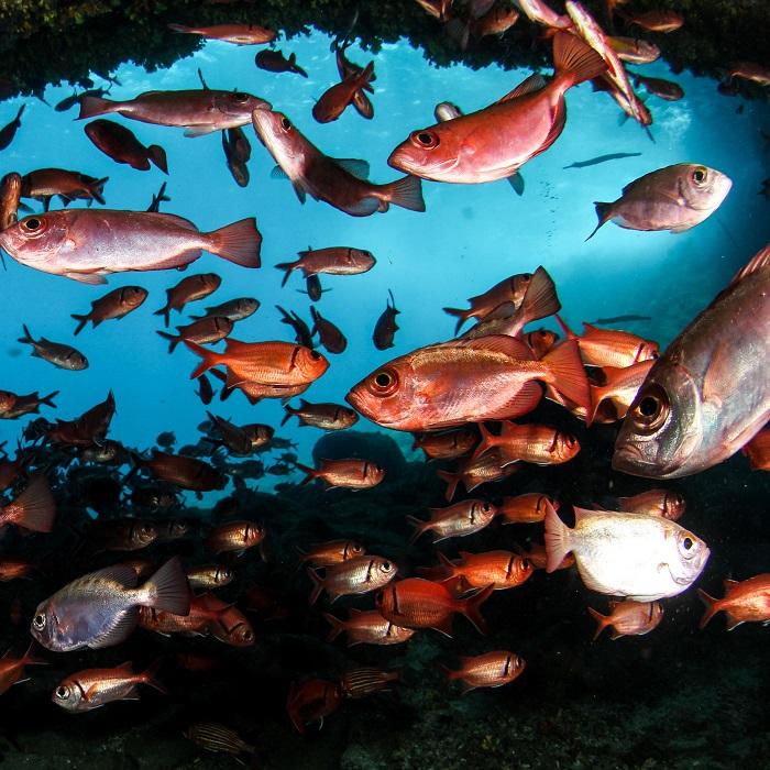 AWATEHA - Gagnez un séjour au Cap Vert !
