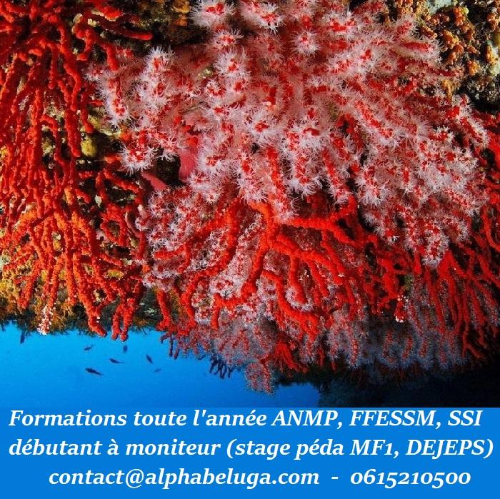 FORMATION PLONGEE en FRANCE en Méditerranée