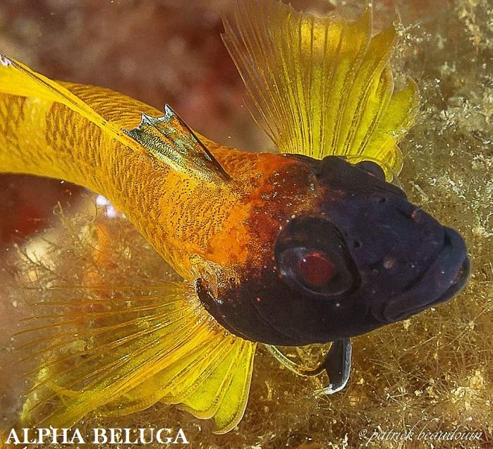 PLONGEE SOLEIL MEDITERRANEE - Bonheur sous-marin