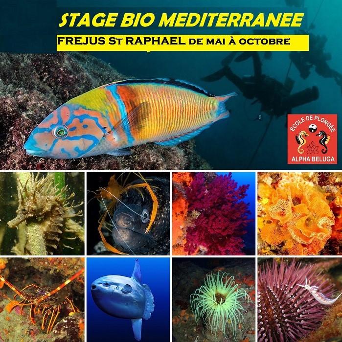 Stage BIO PLONGEE SOUS-MARINE - MERVEILLEUSES RENCONTRES AQUATIQUES