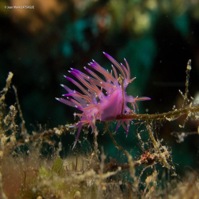 Stage de photographie sous-marine à Épidaure en Grèce