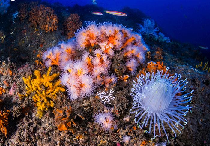 S.O.S. Corales : lancement du premier projet de conservation  marine participative en mer Méditerranée
