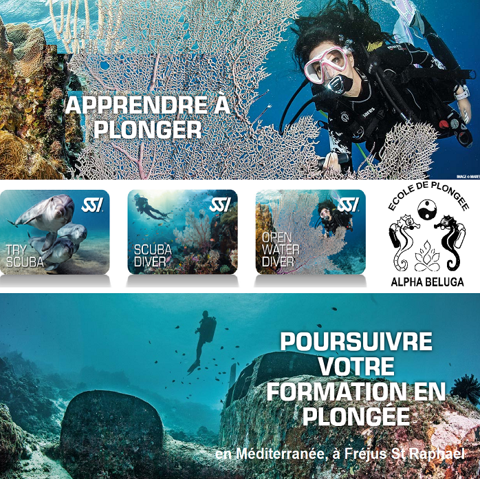Plongée Plaisir en France - Formation Exploration avec ALPHA BELUGA Fréjus