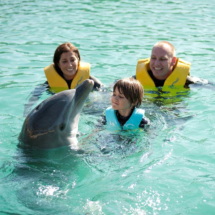 Vivez votre rêve d'enfant et nagez avec les dauphins sauvages à Bimini