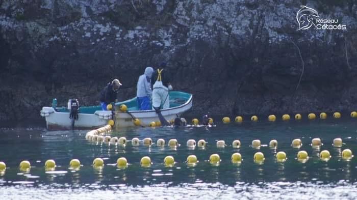 Réseau-Cétacés agit – La chasse au dauphin à Taïji, Japon