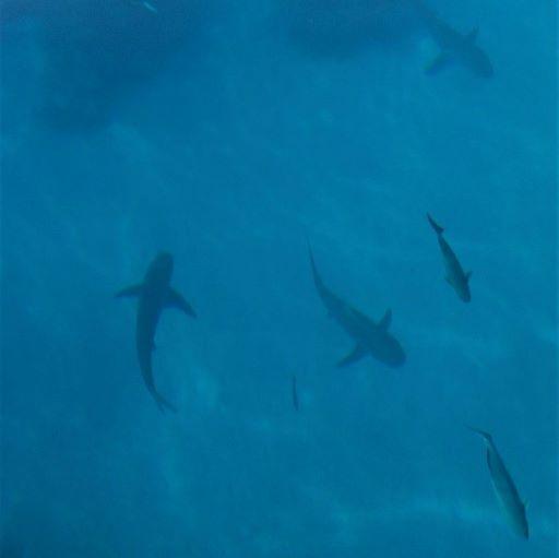 A la rencontre des requins dans un bateau à fond de verre