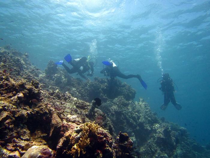 OCEAN DREAMS PEMUTERAN