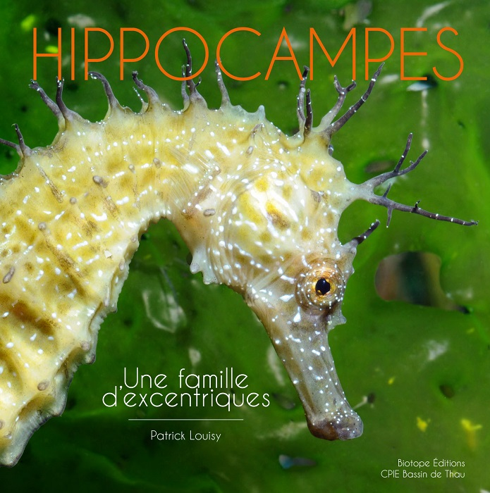 Communique : Hippocampes une famille d'excentriques
